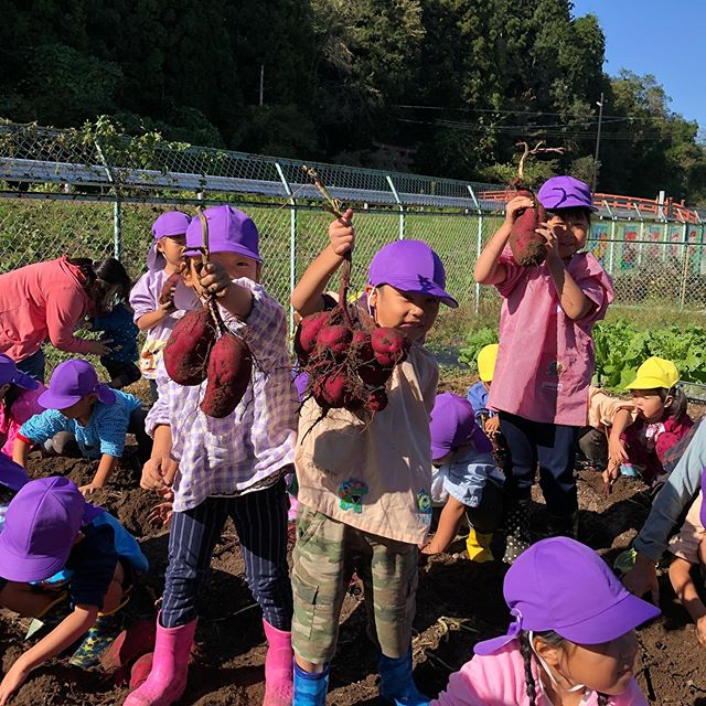 大きな大きな大きなサツマイモをたくさん掘りました(*^_^*)なんの料理をして食べようかな?楽しみ(o^^o)