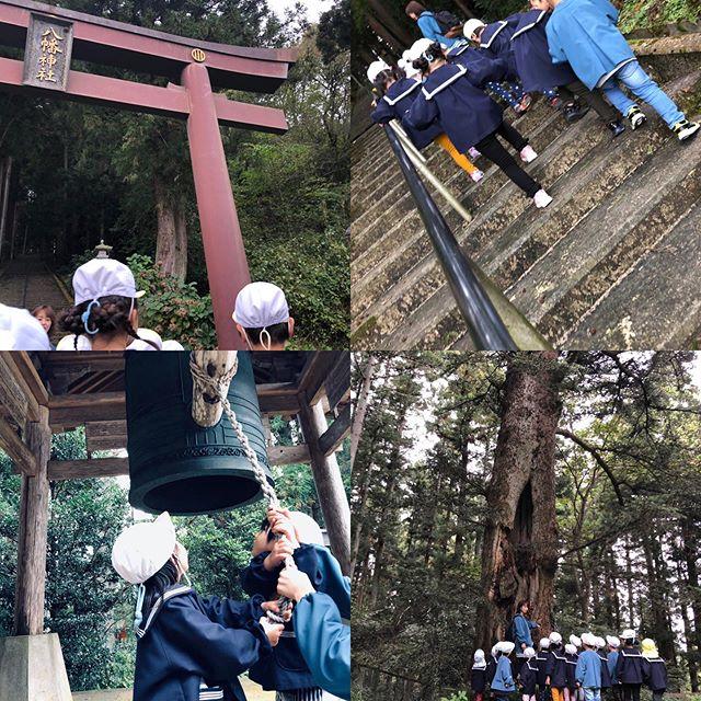 年少さんだけで八幡神社に行ってきたよ!長ーい階段や急な坂道を頑張って歩いたよ!神様のお家に行ってお参りして、トトロの木のところでドングリをたくさん拾ってきたよ(*^▽^*)トトロは寝てたみたいだよ(^_-)